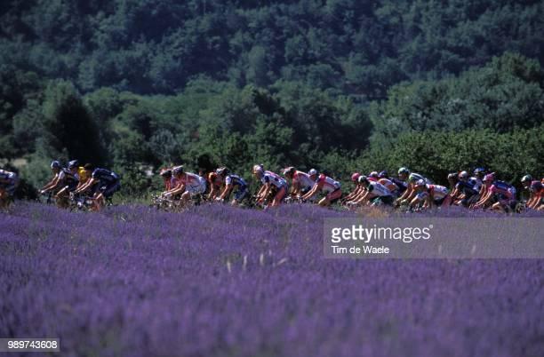 Tour De France 2002 /Illustration Illustratie Peloton Paysage Landscape Landschap Lavande Tdf Ronde Van Frankrijk