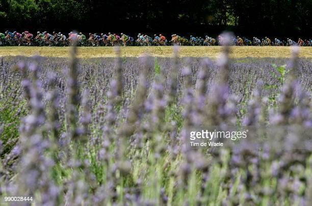 Tour De France 2006 Stage 14Illustration Illustratie Peleton Peloton Landscape Paysage Landschap Lavendel Lavande Montã©Limar Gap Etape Rit 93E Ronde...
