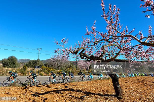 Vuelta Comunidad Valenciana 2016 / Stage 2 Illustration Illustratie/ Peloton Peleton/ Landscape Paysage/ Almond tree/ PETERS Alex / ROCHE Nicolas...