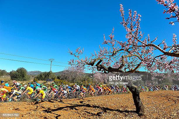 Vuelta Comunidad Valenciana 2016 / Stage 2 Illustration Illustratie/ Peloton Peleton/ Landscape Paysage/ Almond tree/ CastellonFredes / Tour of...