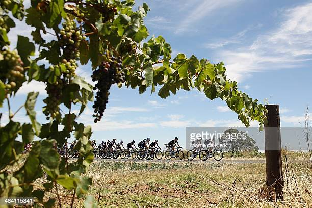 Cyclist compete in the Barossa Valley during stage one of the Tour Down Under on January 21 2014 in Adelaide Australia