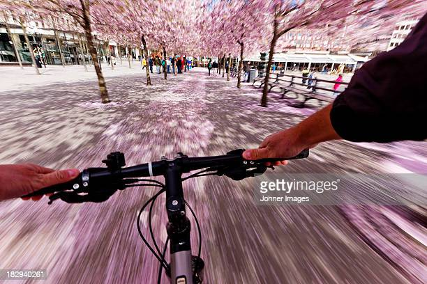 cyclist cycling through road with trees blossoming above - handlebar stock photos and pictures