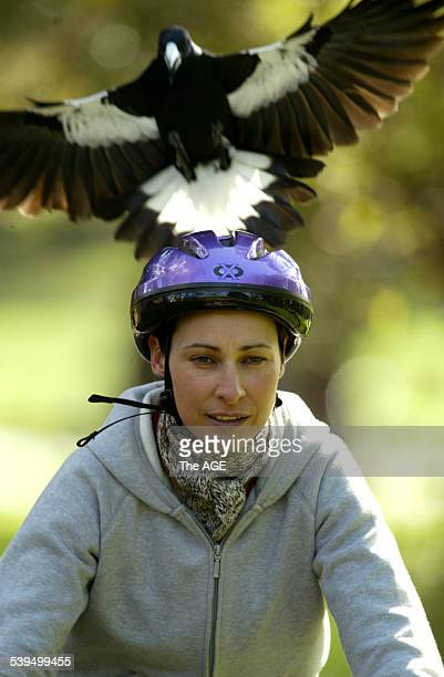 A cyclist is harassed by a swooping bird at Kooyong Park Pavilion 31st of August 2004 THE AGE NEWS Picture by JOE ARMAO