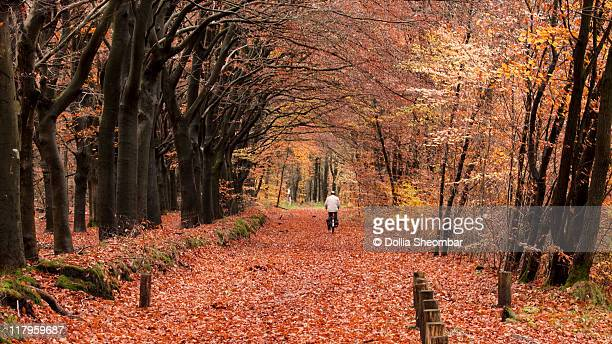 cyclist on autumn path - gelderland stock pictures, royalty-free photos & images