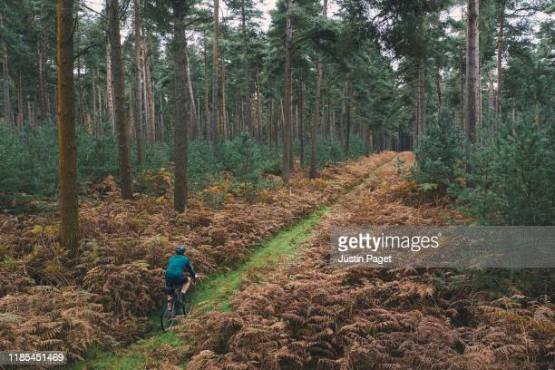 cyclist on forest track - month stock pictures, royalty-free photos & images