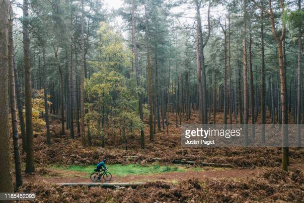 cyclist on forest track - road stock pictures, royalty-free photos & images