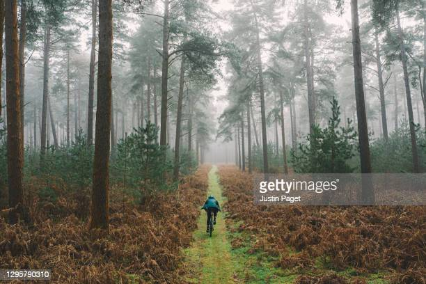 cyclist on forest track - back stock pictures, royalty-free photos & images