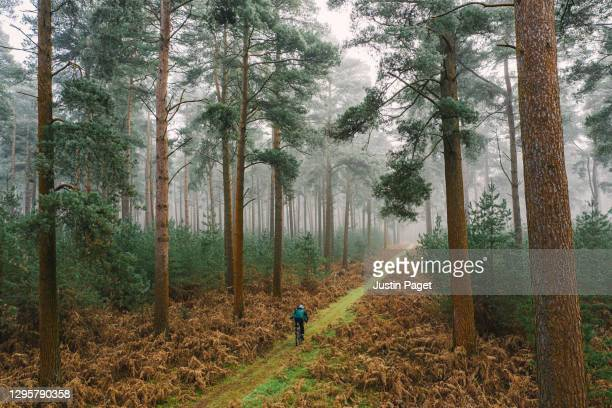cyclist on forest track - drone point of view stock pictures, royalty-free photos & images