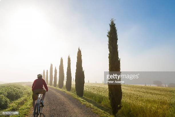 Cyclist on road with cypress trees, Val d'Orcia