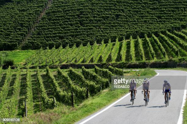Cyclist on the road Belbo valley Langhe Piemonte Italy