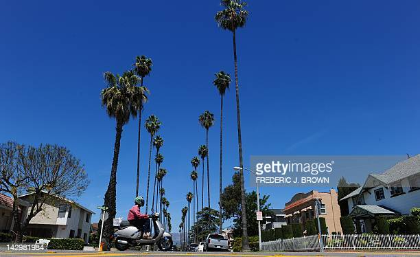 A cyclist rides a moped past a palm treelined street in an Alhambra neighborhood east of downtown Los Angeles on April 16 2012 in California Home...
