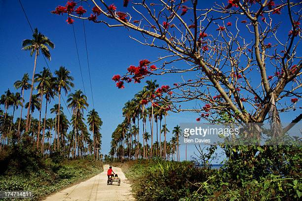 A cyclist rides through a tropical paradise of swaying palm trees along the west coast of Luzon the largest island in the Philippines Beautiful...