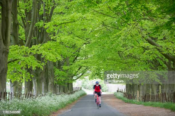 Cyclist touring the Cotswolds riding his bike along an avenue of trees in a country lane at Asthall England
