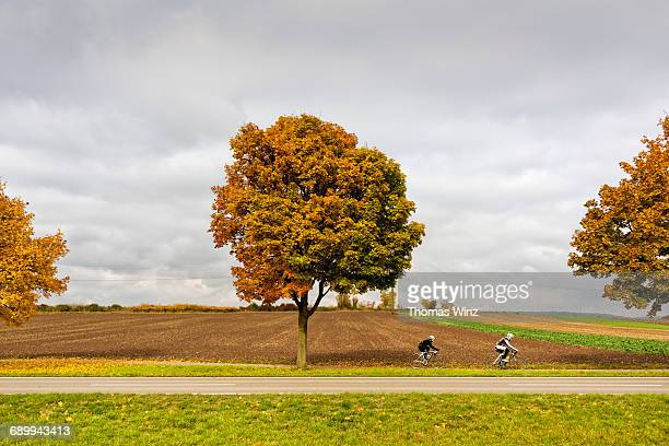 cyclists and fall tres - três pessoas stock pictures, royalty-free photos & images