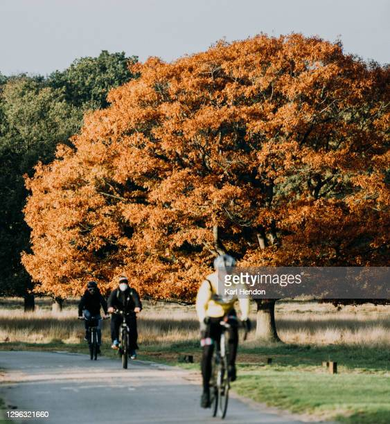 cyclists at sunrise in a london park - stock photo - richmond park stock pictures, royalty-free photos & images