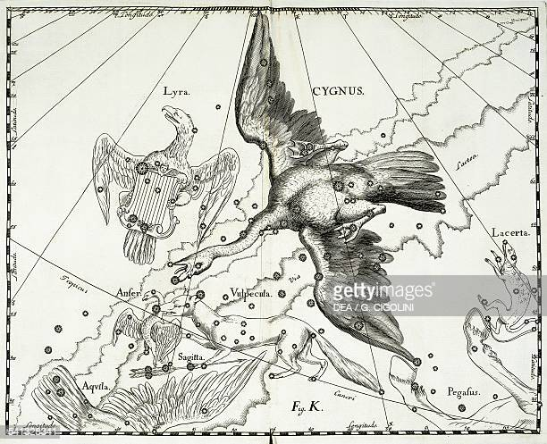 Cygnus the boreal constellation of the Swan or the Northern Cross illustration taken from Johann Hevelius's star atlas Firmamentum Sobiescianum sive...