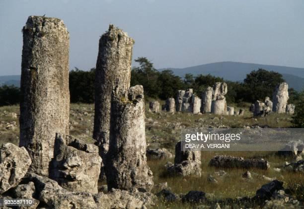 Cylindrical limestone monoliths in the petrified forest of Pobiti Kamani, near Varna, Bulgaria.