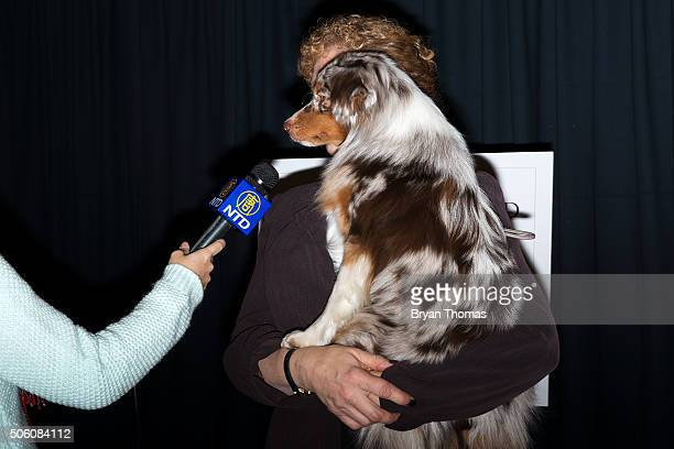 Cynthia Booth holds Rayna a Miniature American Shepard following the announcement that the Westminster Dog Show would introduce seven new dog breeds...