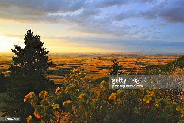 cypress hills - saskatchewan stock pictures, royalty-free photos & images
