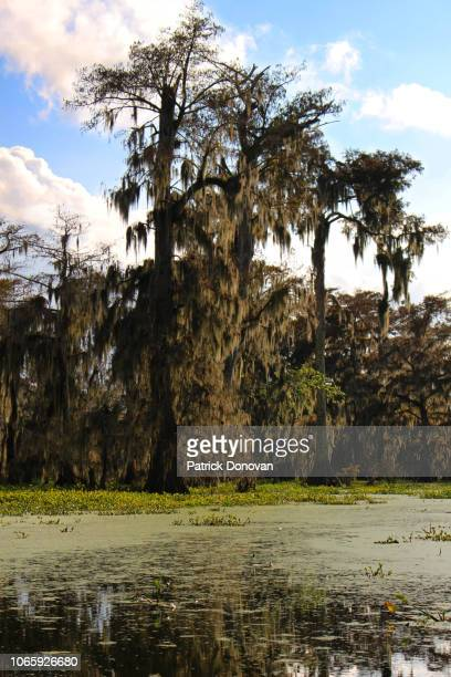cypress, lake martin, louisiana - spanish moss stock pictures, royalty-free photos & images