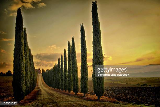 Cypress lined road, Tuscany