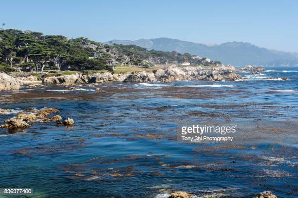 cypress point - pebble beach - monterey california - 17 mile drive - monterey peninsula stock pictures, royalty-free photos & images