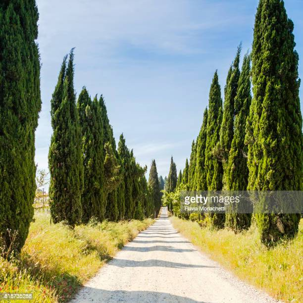 Cypress road in Tuscany