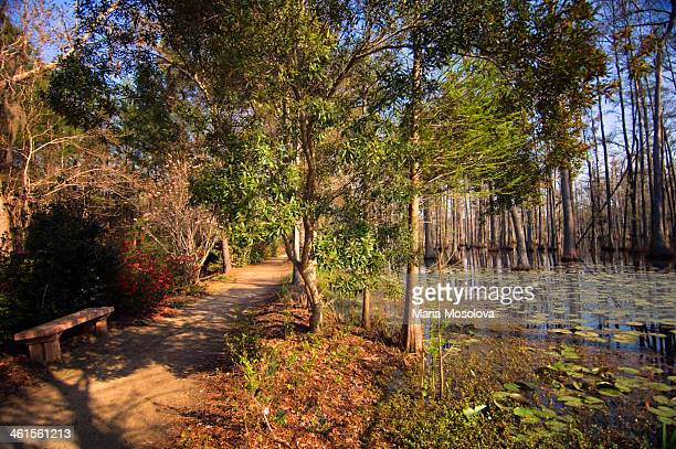cypress swamp in spring. south carolina, usa - cypress swamp stock photos and pictures