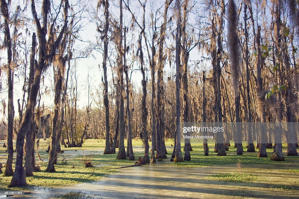 Cypress Swamp In Spring. South Carolina, USA : Stock Photo