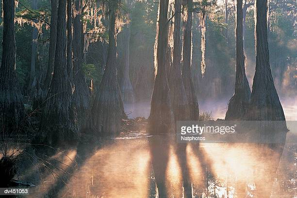 cypress tree pond, pine log state forest, florida, usa - pine log state forest stock photos and pictures