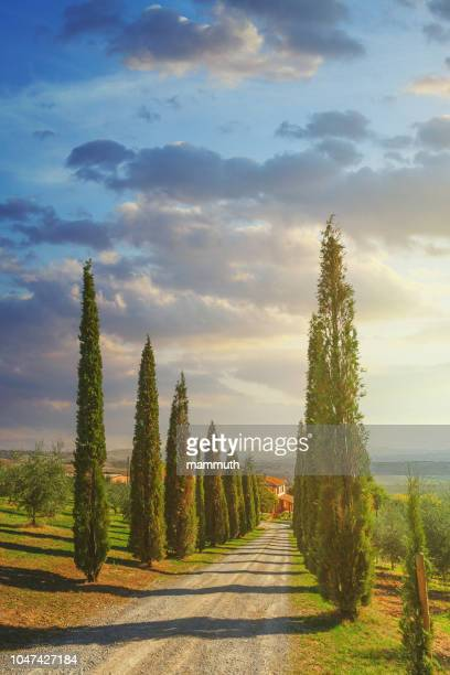 cypress trees along a country road in tuscany, italy - val d'orcia stock pictures, royalty-free photos & images