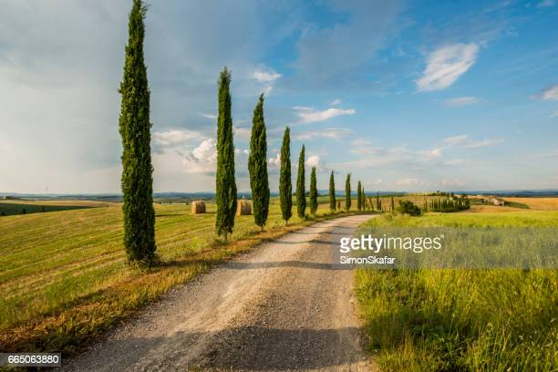 Cypress trees along the road in Tuscany