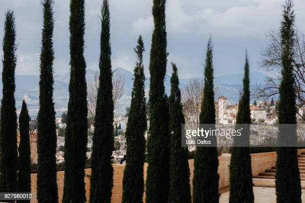 Cypress trees and Albaicin district