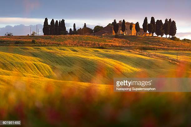 cypress trees and house in tuscany - val d'orcia foto e immagini stock