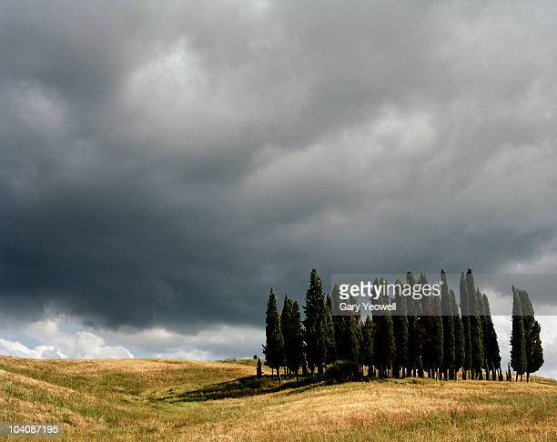 cypress trees and stormclouds in the landscape - yeowell stock pictures, royalty-free photos & images