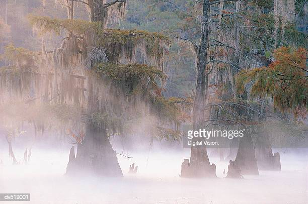 cypress trees, caddo lake near marshall, texas, usa - caddo lake stock pictures, royalty-free photos & images