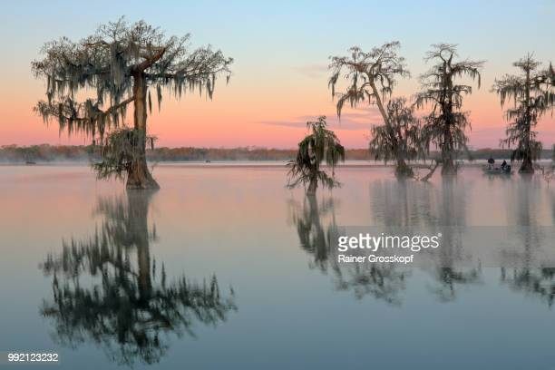 Cypress trees in Lake Martin at sunrise