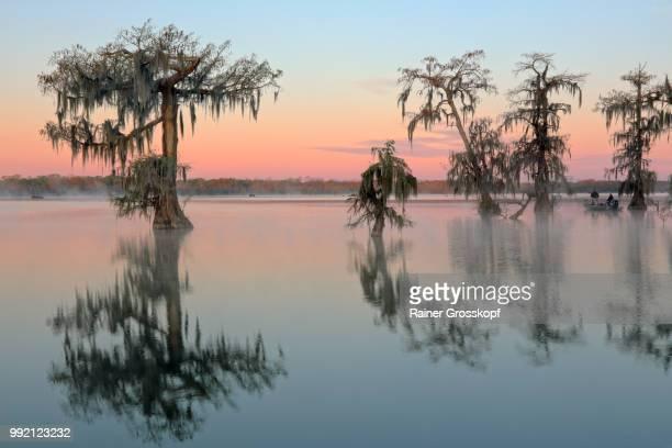 cypress trees in lake martin at sunrise - rainer grosskopf stock-fotos und bilder
