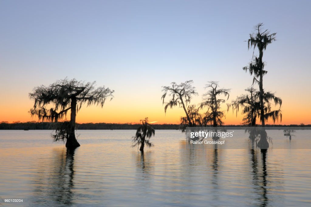 Cypress trees in Lake Martin at sunset : Stock-Foto