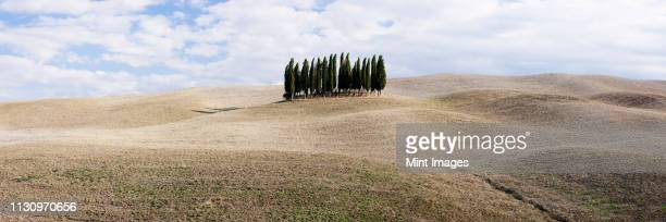 cypress trees in middle of rolling landscape, san quirici d'orcia, tuscany, italy - cypress tree stock pictures, royalty-free photos & images