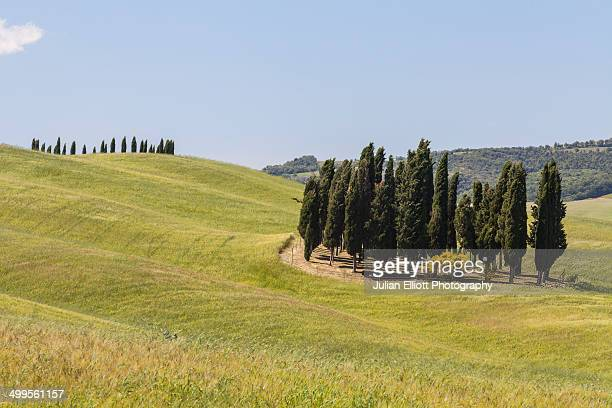 cypress trees in the val d'orcia, tuscany. - 7894 stock pictures, royalty-free photos & images