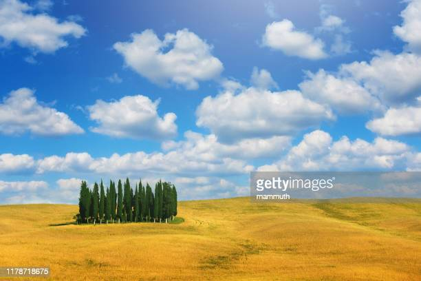 cypress trees in tuscany, italy - val d'orcia stock pictures, royalty-free photos & images