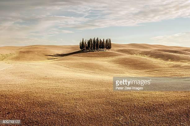 cypress trees in tuscany, italy - árido fotografías e imágenes de stock