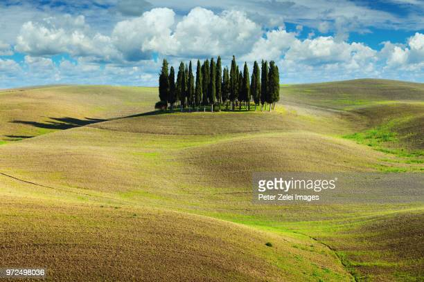 cypress trees in tuscany, italy - val d'orcia foto e immagini stock