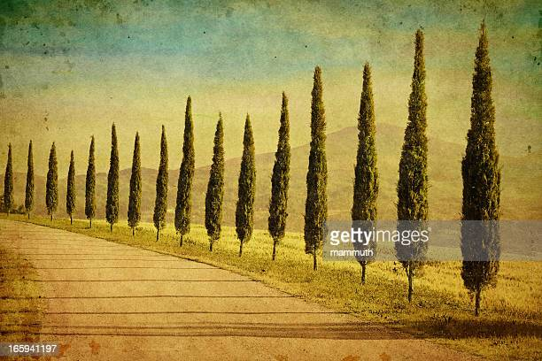 cypress trees in tuscany - italian cypress stock pictures, royalty-free photos & images