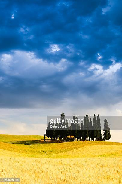 Cypress Trees in Val d'Orcia