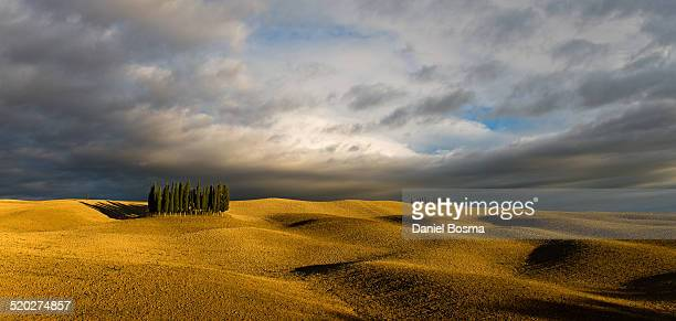 cypress trees on rolling hills near sunset - san quirico d'orcia stock pictures, royalty-free photos & images