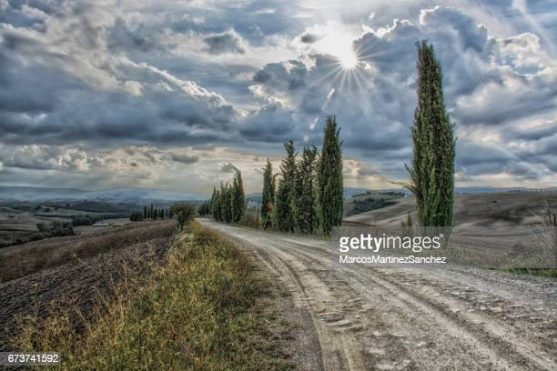 cypress trees path at tuscany - chianti region stock photos and pictures