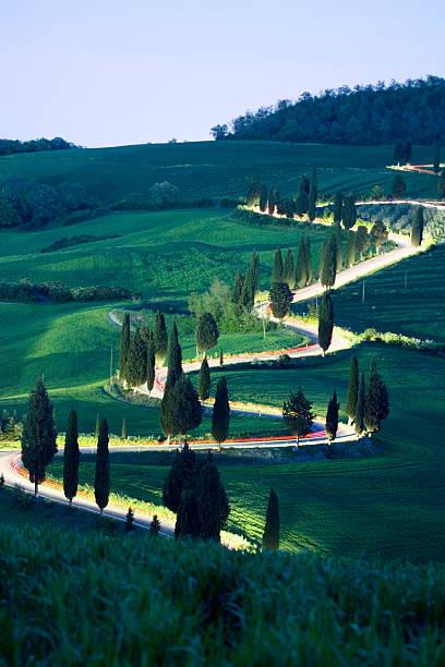 Cypresses along windy road