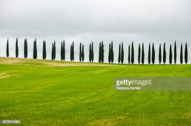 cypresses of val d'orcia - cipresso foto e immagini stock